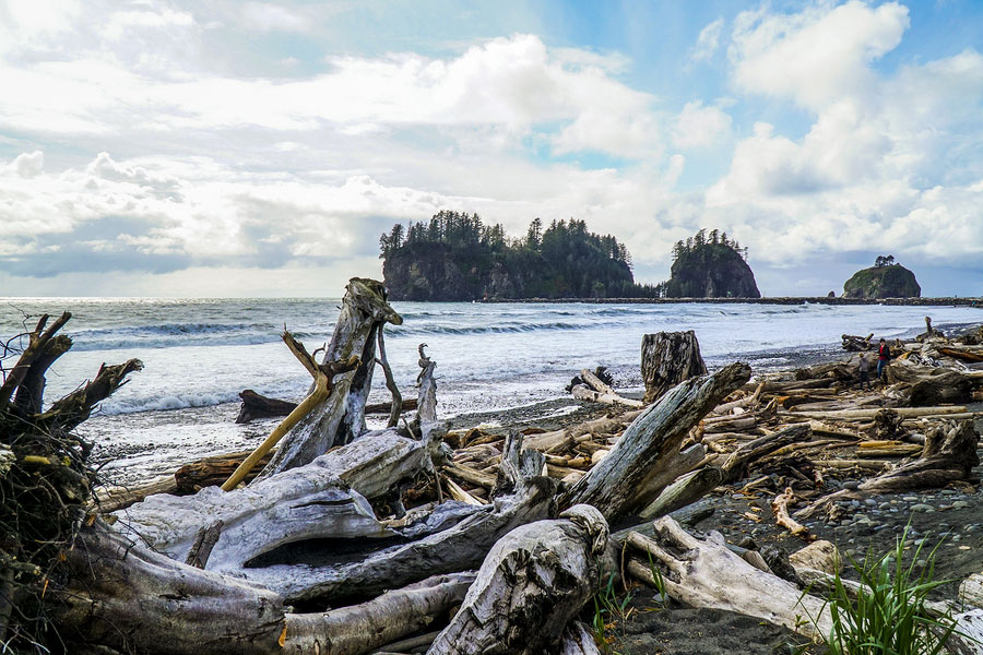 landscape of La Push Beach