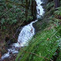 waterfall in Olympic Peninsula